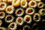 Coral Polyp 6 by Art-Photo
