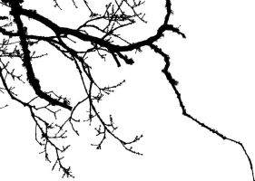 Branches by LouisTN