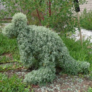 Topiary Wallaby. by me-and-mojo