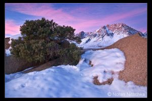 Buttermilk Sunrise by narmansk8