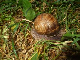 Snail collection 01 by Roack
