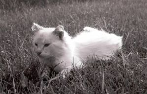 Life of a Farm Cat by springloaded