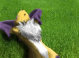Renamon in the grass by DigimonReach
