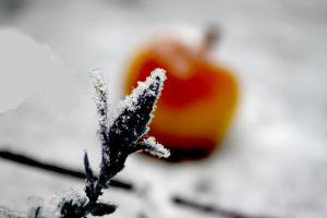 Lonely apple by E-moX