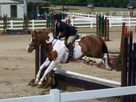 Horse show stock 9 by shush-stock