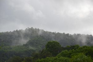 Sub-tropical Forest of Martinique by A1Z2E3R