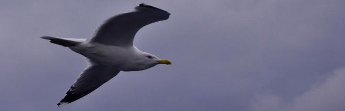 Seagull2 by ecokendo