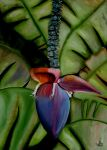 Banana flower by WendyMitchell