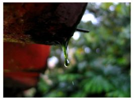 The Green Drop by icoman