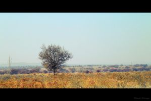 Lonely Tree by techngame