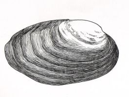 Freshwater Mussel 1 by crawdadEmily