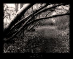 The Woods by SEnigmaticX