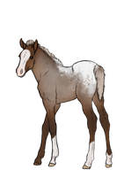 Foal design for The-Day-Of-Shadow by SlightlyMadStables