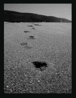 Follow my Footsteps by Fractal-Flux