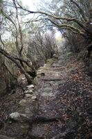 La Gomera forest 1 by Ieris-Stock