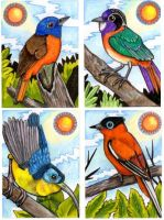 Colourful Birds of Madagascar by lemurkat
