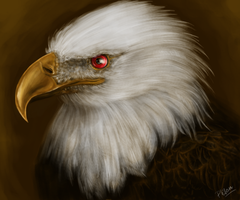 red eyed eagle by Phihacz