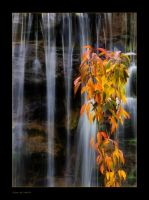 Autumn falls - lines by kodo34