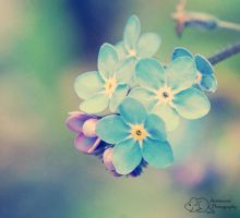 Small, Fragile and Blue by Annimouse