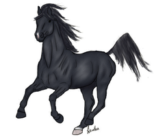 Black Arabian by DaMoose08