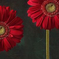 gerbera and playful mood by Floriandra
