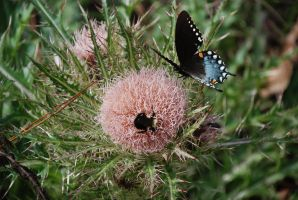 Butterflies and Bumble-bees... by iluvobiwan91