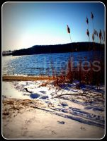 Snow and Reeds by lehPhotography