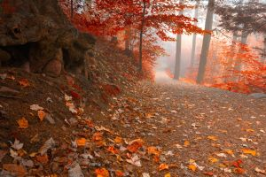 Misty Autumn Wonderland Trail by somadjinn