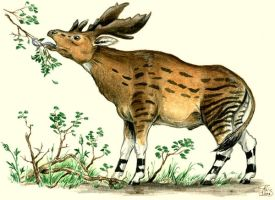 Sivatherium sp. by batworker