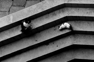 Cats and Stairs by marthanumber23