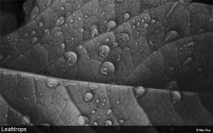 Leafdrops by Mac-Ray