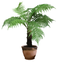 plant png 7 by DIGITALWIDERESOURCE