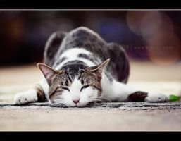 My Cat 2 by kietdc
