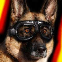 German Shepherd Icon by Scubacat17