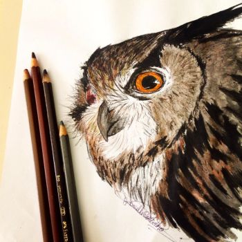 European Eagle Owl by GabrielleC-Drawings
