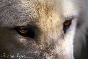 .:Golden Eyes:. by WhiteSpiritWolf