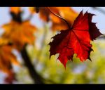 Autumn in Spring by tabouret