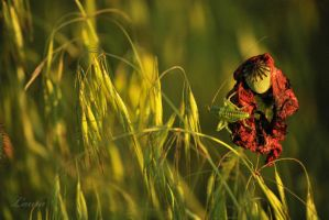 Step one to summer - grasshoper by Lk-Photography
