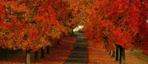 Autum Trees by kinxmizu