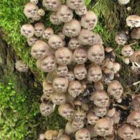 Scary shrooms by RogerStork