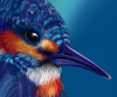 Kingfisher, Work in Progress by Climmie