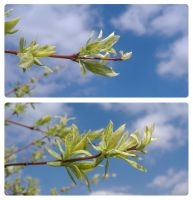 Branches by AndyBuck