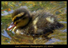 Spring Young 4 by KSPhotographic