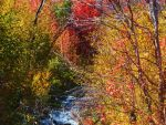 Autumn River by XxSilverOwl13xX