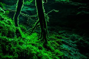 Luminous tree branches by bruttbrutt