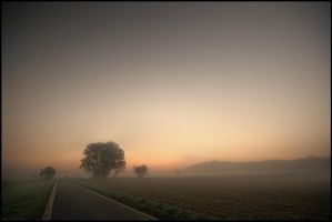 Fog by Crossie