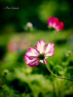 In summer breeze. by Phototubby