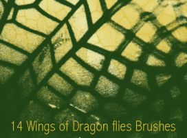 14 Wings of dragon flies Brushes by Globaludodesign