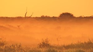 Blue Wildebeest - Dust of Life by LivingWild