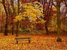 park bench by AdrianaKH-75